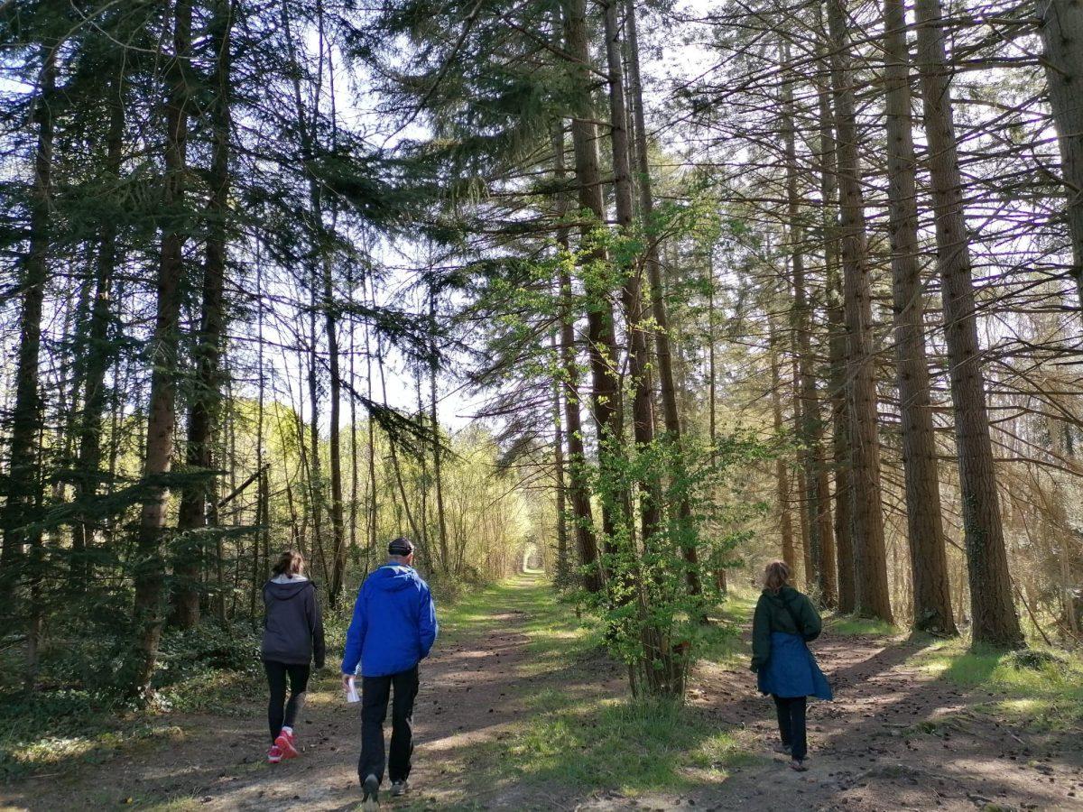 Marcher, forêt, se ressourcer, comminges pyrénées, campagne, air pur, activité famille