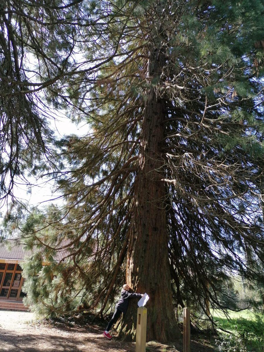 Forêt cardeilhac, arboretum, activité famille, campagne
