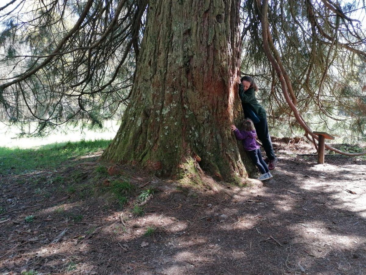 Forêt, cardeilhac, jouer dehors, s'oxygéner