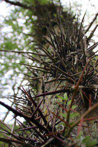 Arboretum-2-CARDEILHAC