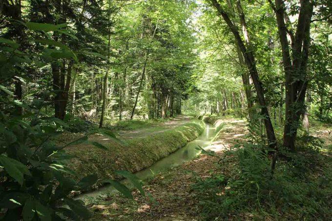 Arboretum-5-CARDEILHAC