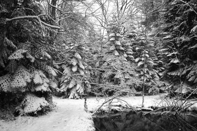 Arboretum-CARDEILHAC