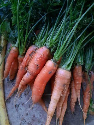 Ferme-des-cabanettes-anan-legumes
