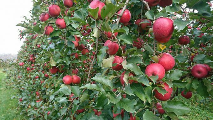 Fruits–Les-Vergers-de-la-Gentille–Pointis-Inard