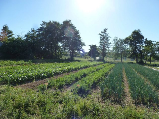 Jardin–Les-Jardins-du-Flouran–L-Isle-en-Dodon