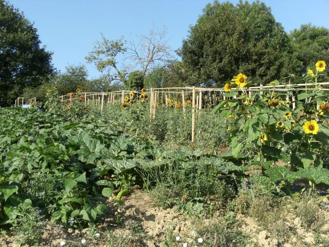 Legumes–SPEZIALI-Raphael–Cassagnabere-Tournas–2-
