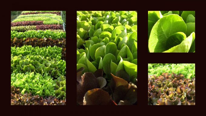 Legumes–SPEZIALI-Raphael–Cassagnabere-Tournas–3-