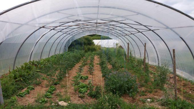 Legumes–Savouillan-Emilie–Renaud-Johann–Blajan–3-