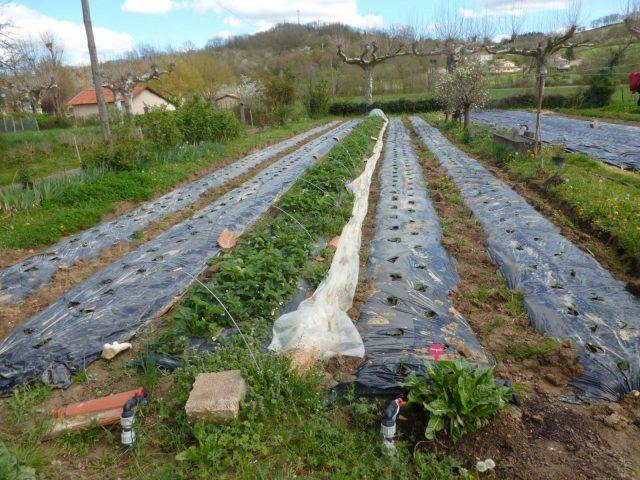 Les-jardins-du-Flouran–l-Isle-en-Dodon