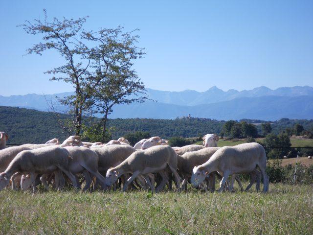 agneaux–ferme-de-Soubiane–Boussan