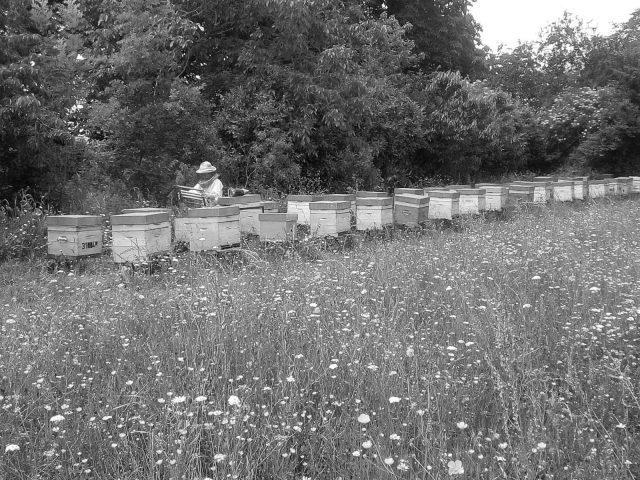 apiculteur–BERDIER-Cecile–Saint-Marcet–2-