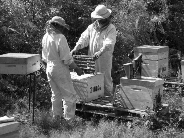 apiculteur–BERDIER-Cecile–Saint-Marcet