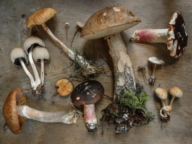 champignons-2