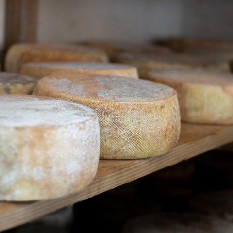 fromage-chevre–Aulon–Gaec-Ramounas-les-Estraous