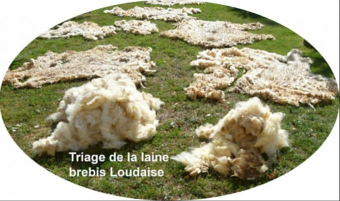 triage-fileuse-de-laine-PEGUILHAN