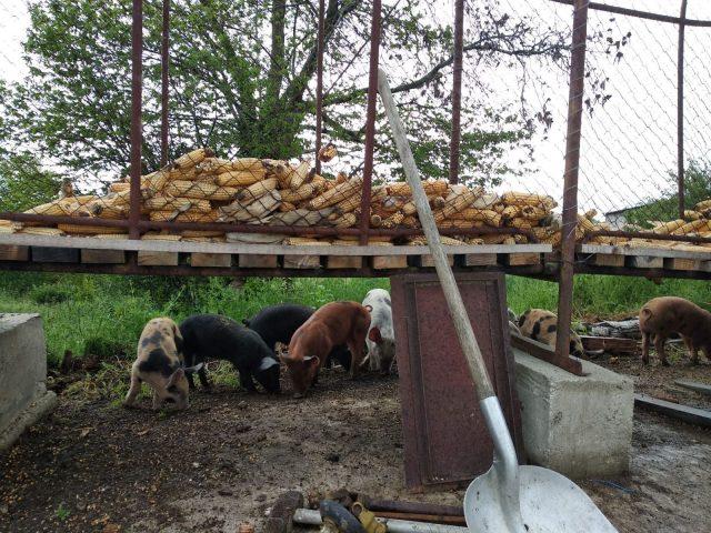 viande–la-ferme-des-hauts-coteaux–Saint-Plancard–4-