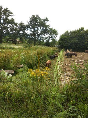 viande–la-ferme-des-hauts-coteaux–Saint-Plancard–5-
