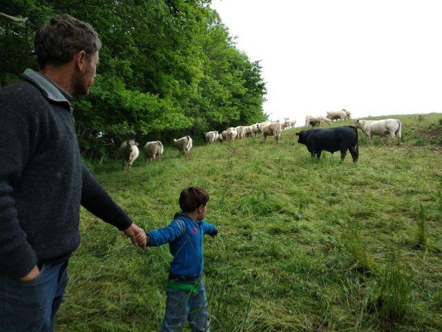 viande–la-ferme-des-hauts-coteaux–Saint-Plancard